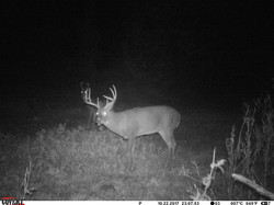 deer trail pics (25)