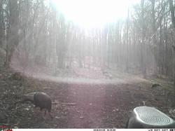 turkey trail pics a (56)
