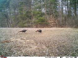 turkey trail pics a (37)