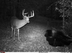 deer trail pics (12)