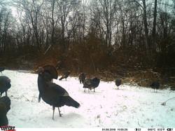 turkey trail pics a (21)