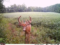 deer trail pics (77)