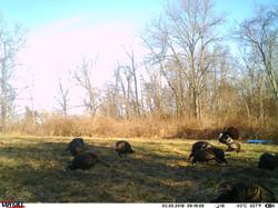 turkey trail pics a (26)