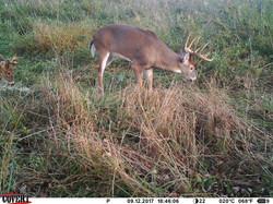 deer trail pics (37)