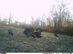 turkey trail pics a (23)