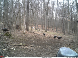 turkey trail pics a (49)