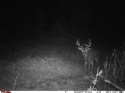 deer trail pics (24)