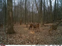 deer trail pics (32)
