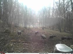 turkey trail pics a (53)
