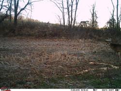 deer trail pics (71)