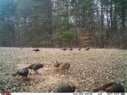 turkey trail pics a (32)