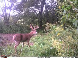 deer trail pics (44)
