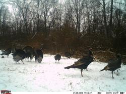 turkey trail pics a (19)
