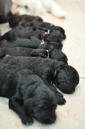puppy line up.jpg