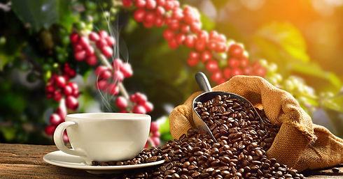 bs-aus-coffee-farm-lrg-1680x880.jpg
