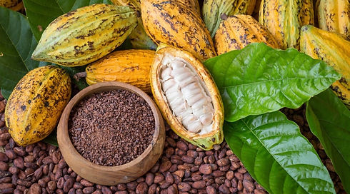 Cacao2_Panther-721x400.jpg