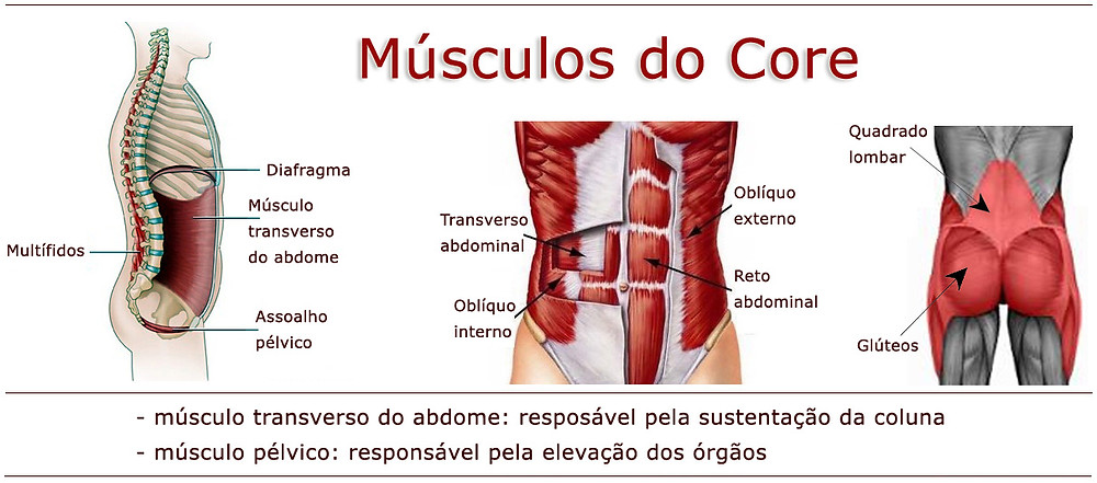 Músculos do Core - Pilates Ponto Norte