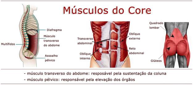 Resultado de imagem para core musculos