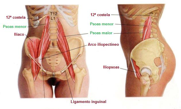 Psoas: o músculo mais vital de seu corpo - Blog Pilates Ponto Norte