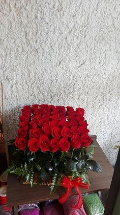 Jardin de 50 rosas