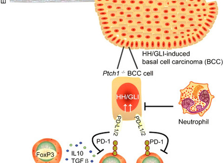CCS researchers identify immunosuppressive mechanisms in skin cancer development