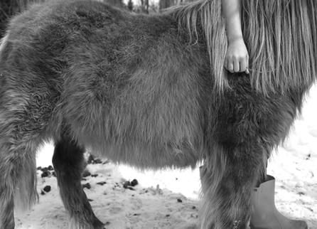 The Female Centaure