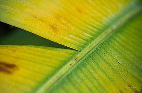 botanic gardens, tropical, singapore, leaves, nature, macrophotography