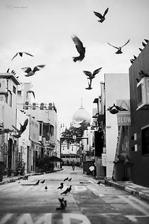 Flying birds near Arab Street, Singapore.
