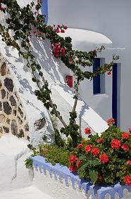 Photograph of a white wall with red flowers in Anafiotika, Athens, Greece.