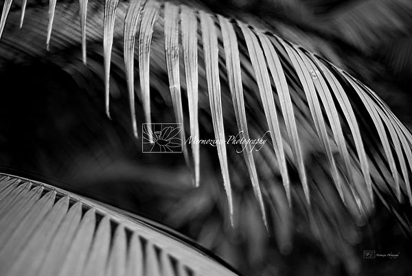 black and white palm tree leaves.