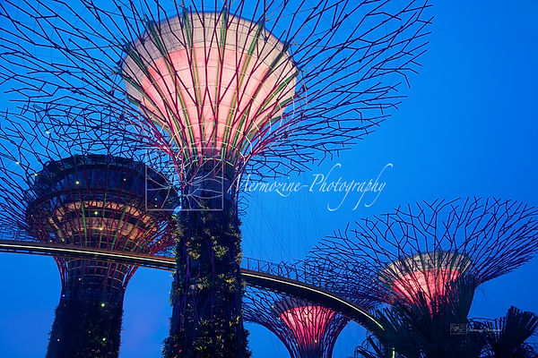 Gardens by the Bay-2614.jpg