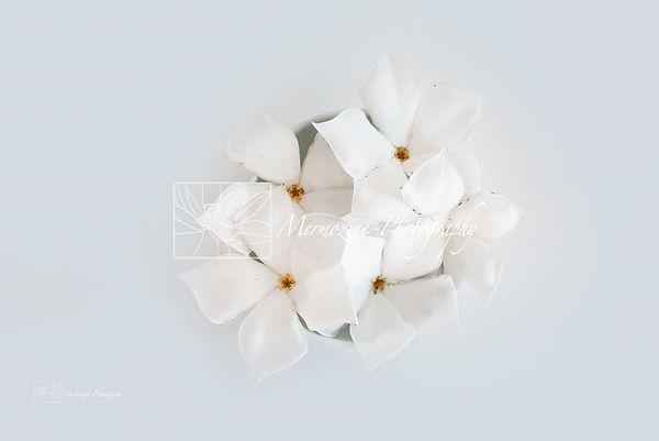 Fleurs blanches 1.jpg