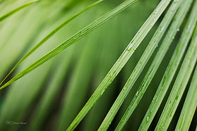 Details of a palm tree leaf.