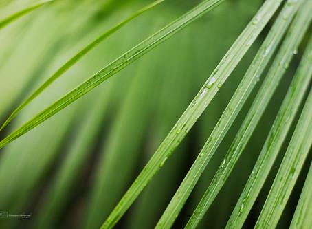 Green lush...