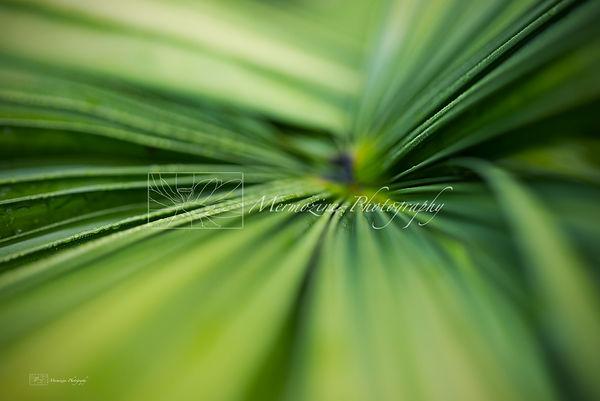 Botanic Gardens-2265.jpg