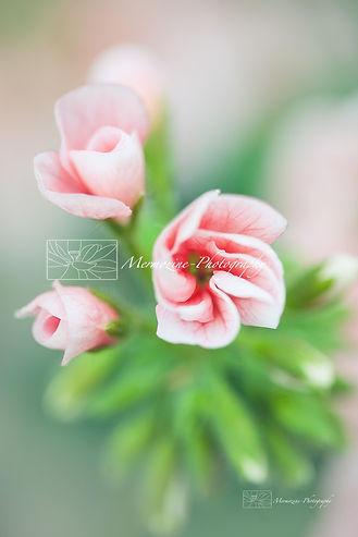Gardens by the Bay-9889.jpg