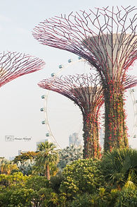 Supertree grove at Gardens by the Bay, Singapore.