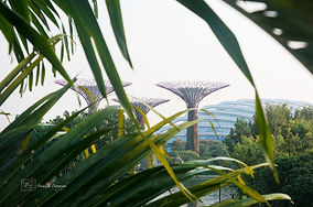 The super trees in Gardens by the Bay, Singapore.