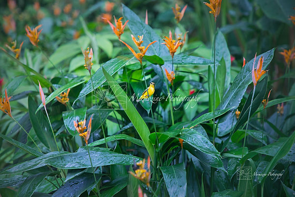 Botanic Gardens-8597.jpg