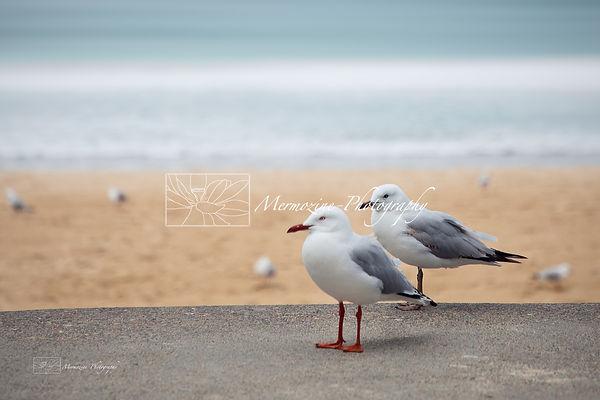 Manly beach-1471.jpg