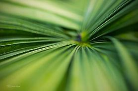 macrophotography, botanic gardens, singapore, leaves