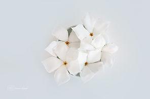 White flowers on a white blackground.