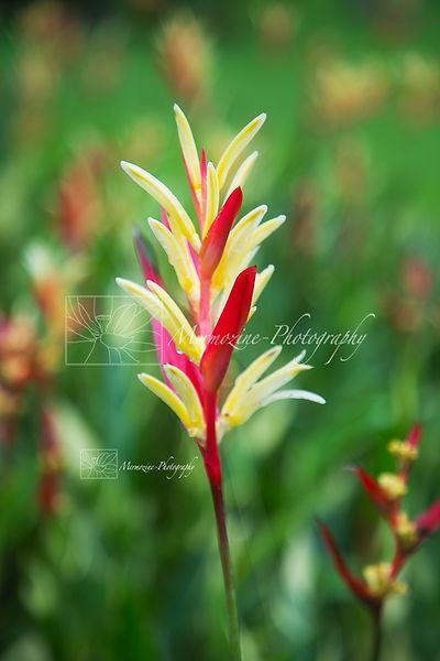 Botanic Gardens-8596.jpg