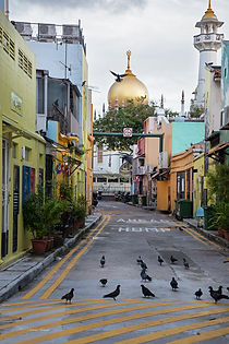 Birds in the streets of Kampong Glam, Singapore.