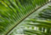Botanic Gardens of Singapore.