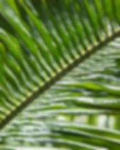 Botanic Gardens-8580.jpg