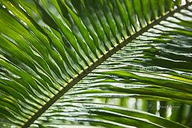 Botanic Gardens, Singapore.