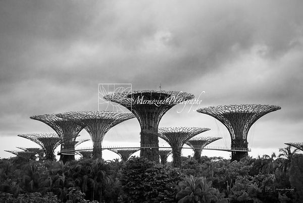 The supertrees grove, gardens by the bay, Singapore.