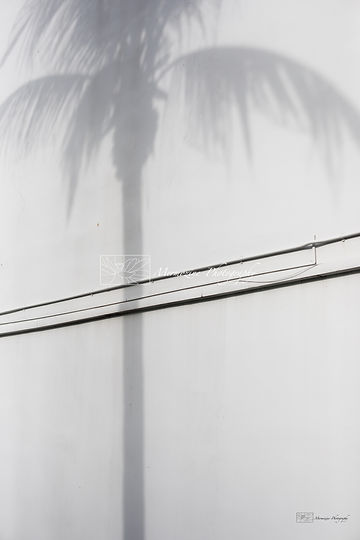Shadows of a palm tree, street photography, minimalism, Singapore.
