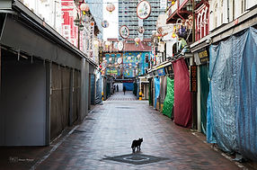 Photographs of Singapore: Chinatown (Black Cat)